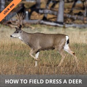 How to field dress a deer HP