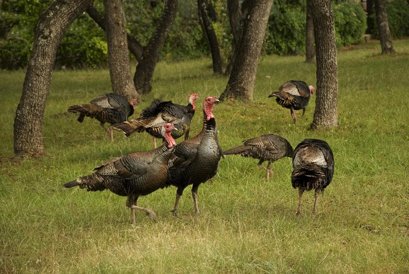 Turkey Hunting Gear Essentials 1