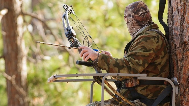 Bow hunter in climbing tree stand